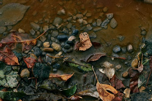 Stones And Leaves On Wet Ground