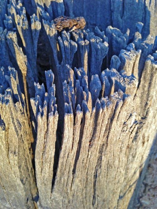 Imagine de stoc gratuită din de lemn, descompunere, fundal