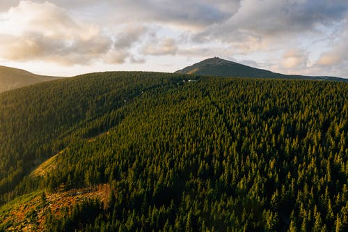Aerial Photo of Forest Across Mountain