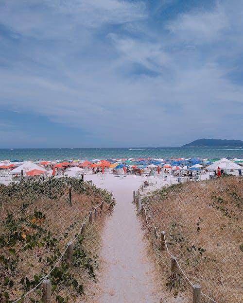 トレイル, ビーチ, 地平線, 夏の無料の写真素材