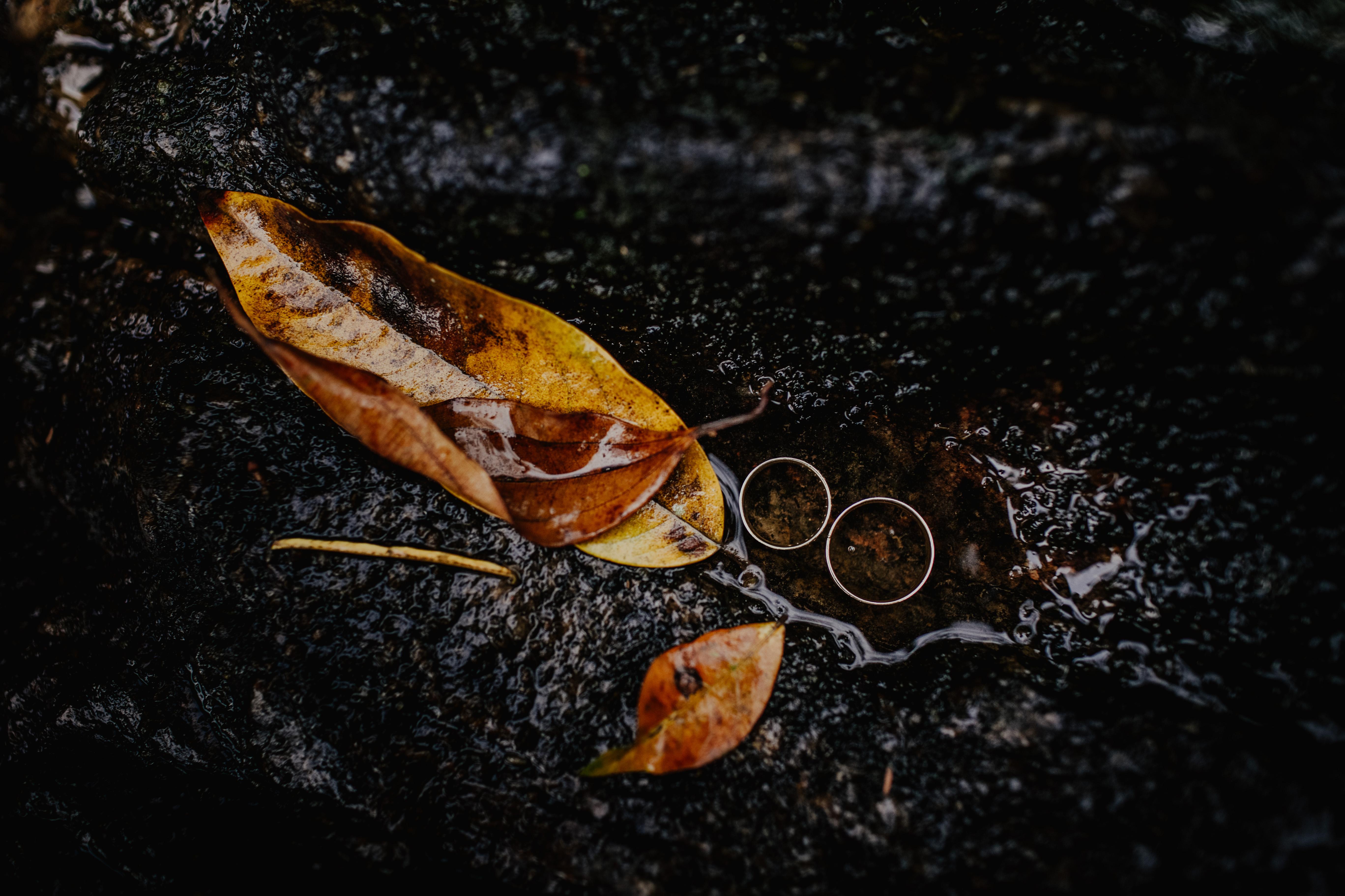 Brown Wet Leaves