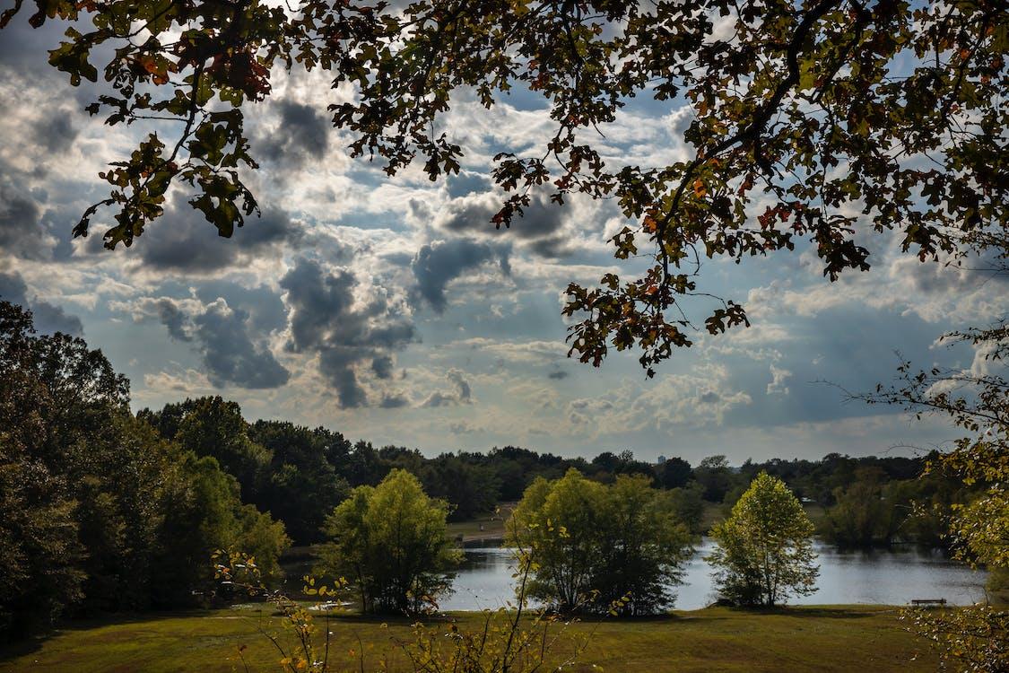 açık hava, ağaçlar, boş alan