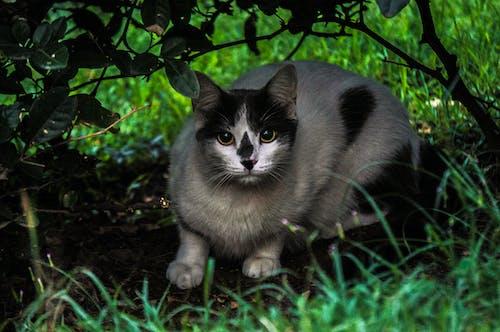 Foto profissional grátis de gato