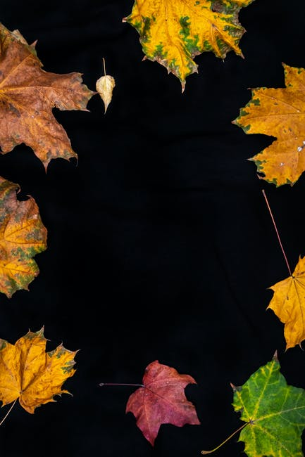 Assorted color maple leaves
