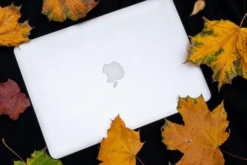 3C用品, MacBook, 乾燥, 乾的 的 免費圖庫相片