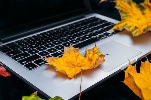 3C用品, MacBook, 乾燥, 乾的 的 免费素材照片