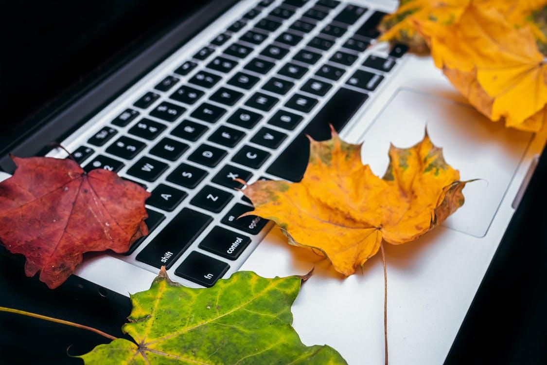 bærbar datamaskin, blader, brun