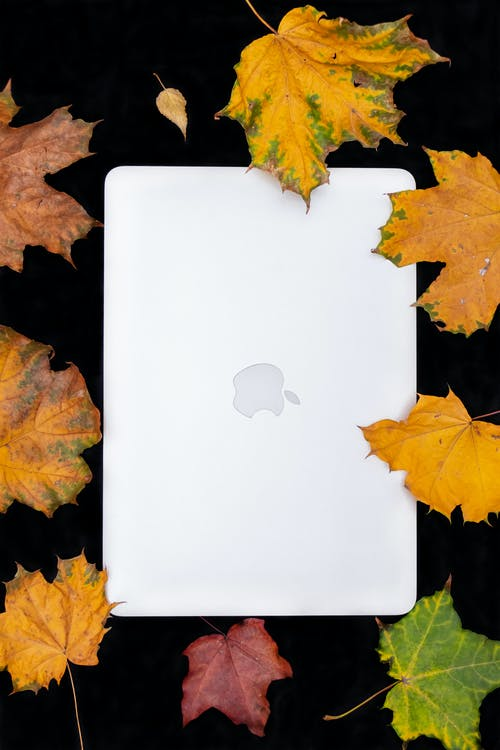 White Macbook Surrounded by Dry Leaves