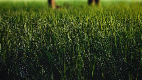 下田, 农业领域, 印度农场, 弗兰兰 的 免费素材照片