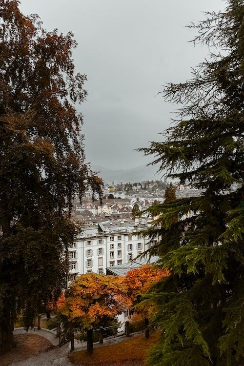 Arbres Avec Des Feuilles D'automne Près D'un Bâtiment