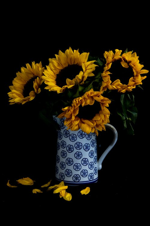 Photo of Sunflowers in Vase Against Black Background