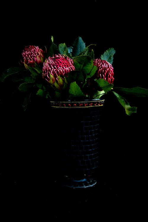 Photo of Protea in Vase Against Black Background