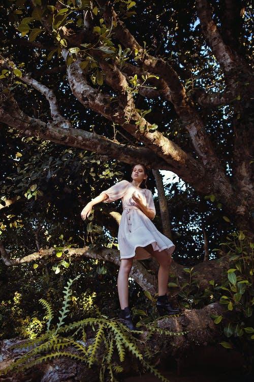árvore, de pé, ensaio fotográfico