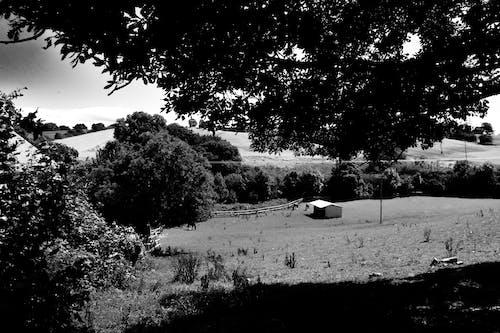 Ilmainen kuvapankkikuva tunnisteilla harmaasävyt, kenttä, luonto, maaseudun