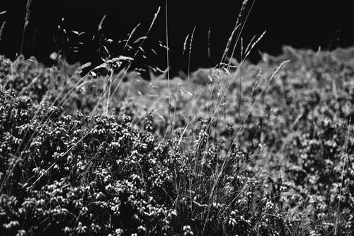 Gratis stockfoto met bloeien, bloeiend, bloesem, blurry achtergrond