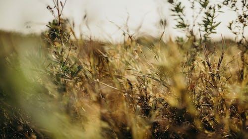 Ảnh lưu trữ miễn phí về ánh sáng, ánh sáng ban ngày, cận cảnh, cánh đồng