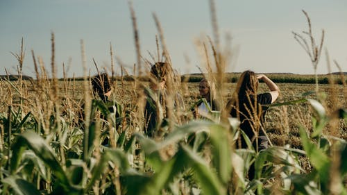 People Standing in a Corn Plant Field