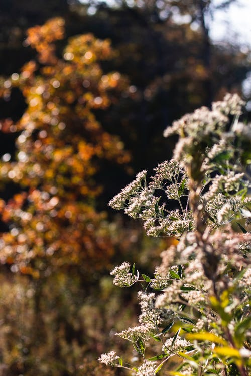 Free stock photo of autumn, fall, flowers, forest
