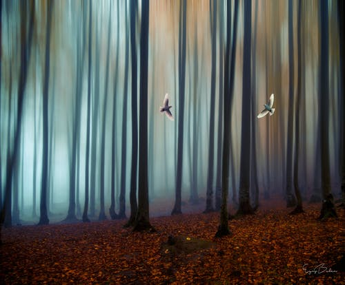 ペギオン, 森林, 鳥の無料の写真素材