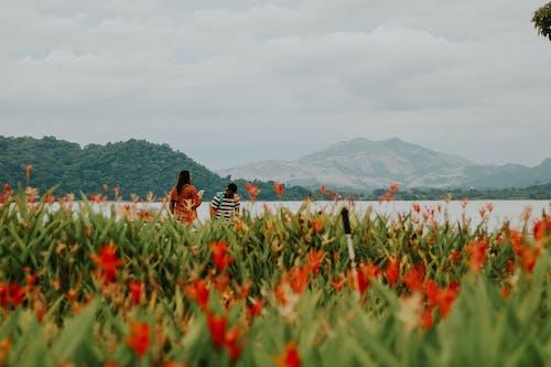 Foto d'estoc gratuïta de a l'aire lliure, agricultura, bell paisatge, bellesa a la natura