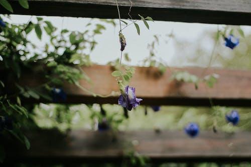 Foto d'estoc gratuïta de blau, colors de tardor, flor bonica, flors