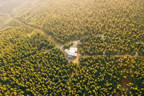 Aerial Photo of Buildings Surrounded by Trees