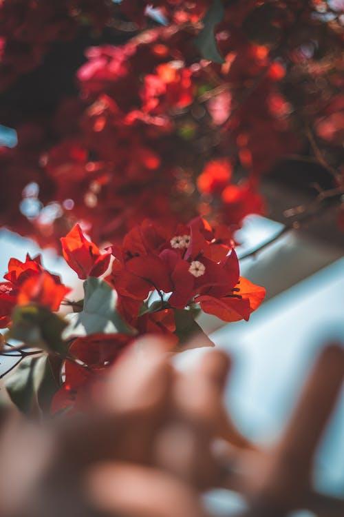 Безкоштовне стокове фото на тему «великий план, Денне світло, зростання, квіти»