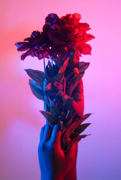 Free stock photo of blue, bouquet, colorful