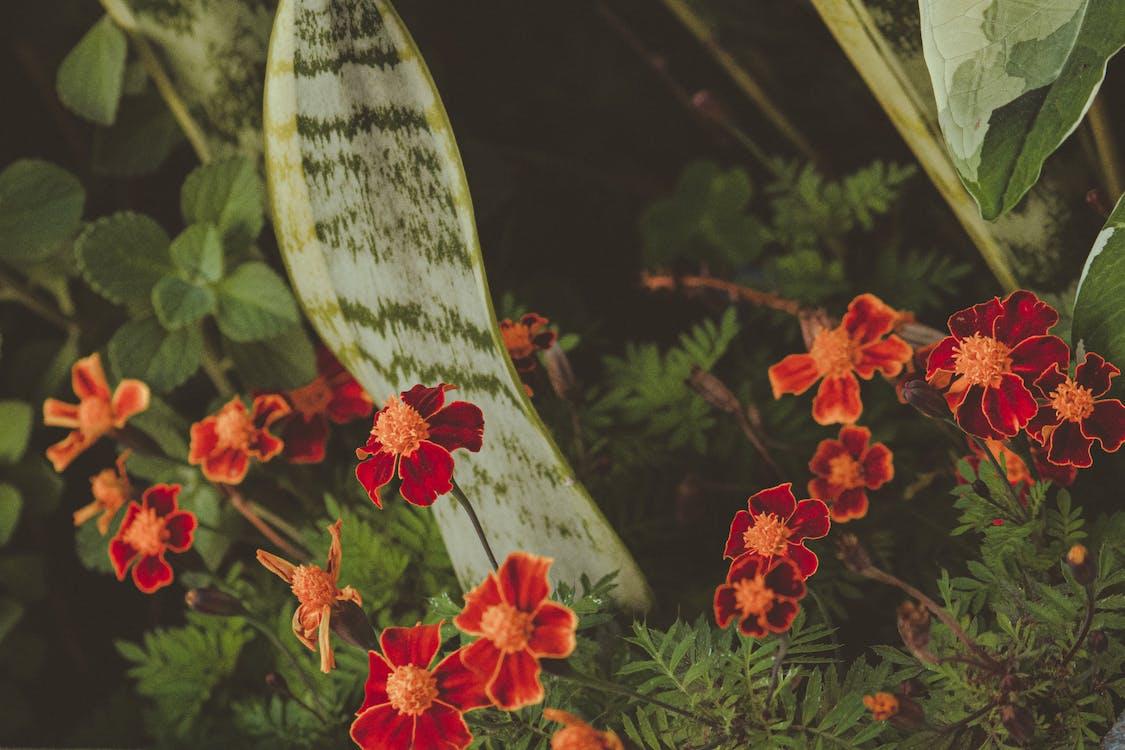 a l'aire lliure, botànic, brillant