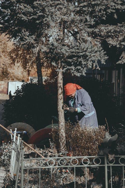 açık hava, ağaçlar, anneanne, aşındırmak içeren Ücretsiz stok fotoğraf
