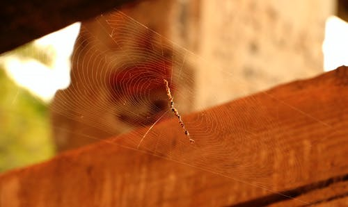 Free stock photo of nature, old house, spider web