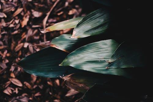 Foto stok gratis alam, alami, berfokus, daun kering