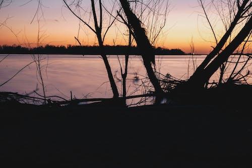 Foto stok gratis air, backlit, bayangan hitam, danau