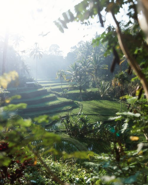 Free stock photo of bali, beatiful landscape, beauty of nature, dark green plants