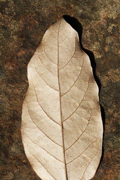 årstid, blad, brun
