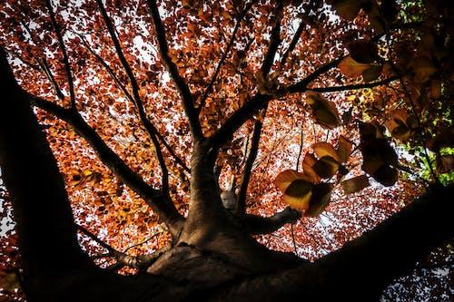 คลังภาพถ่ายฟรี ของ farbenpracht, มีสีสัน, ฤดูใบไม้ร่วง, สีของฤดูใบไม้ร่วง