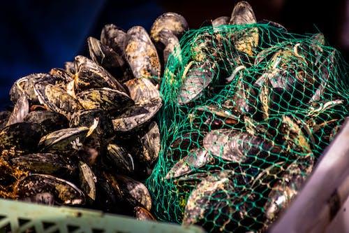 คลังภาพถ่ายฟรี ของ กุ้ง, ตลาดปลา, ทะเล, อิตาลี