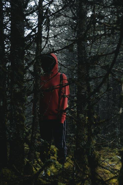 Ảnh lưu trữ miễn phí về đứng, rừng