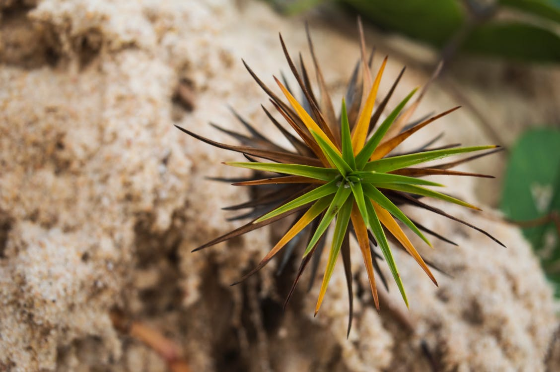 Kostnadsfri bild av blomma, grön, sand