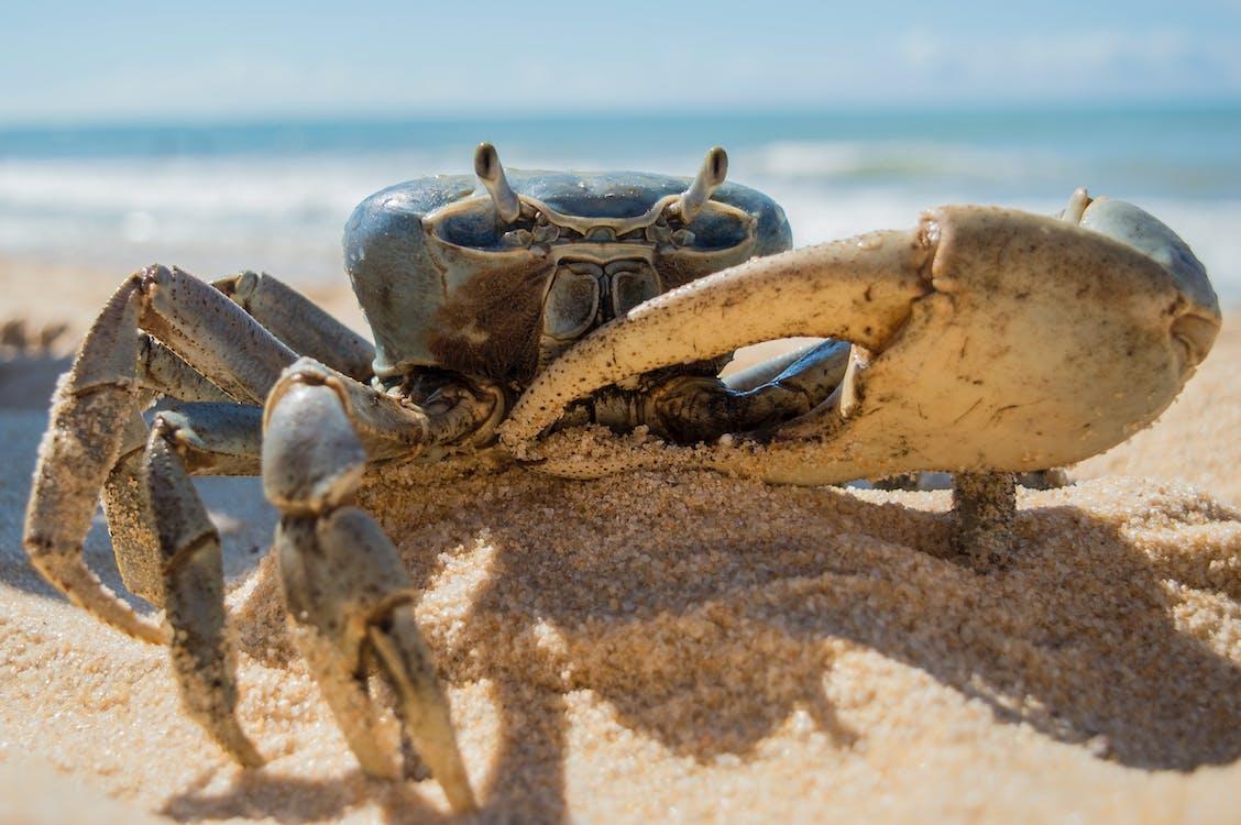 ακτή, άμμος, αναψυχή