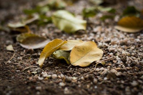 Free stock photo of autumn, change, starting