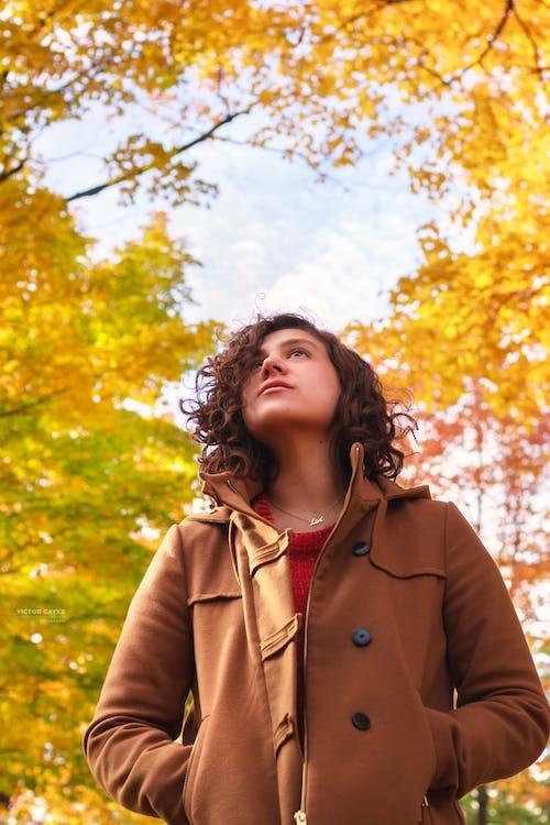 Free stock photo of autumn, autumn leaves, canada, colors