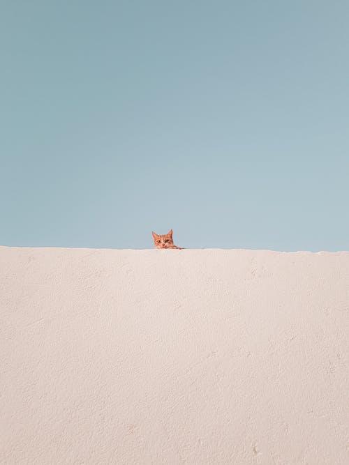 Foto profissional grátis de animal, animal de estimação, ao ar livre, céu azul