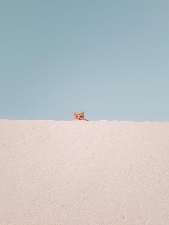 Peeking Little Cat