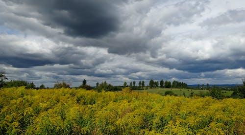 景觀 的 免费素材照片