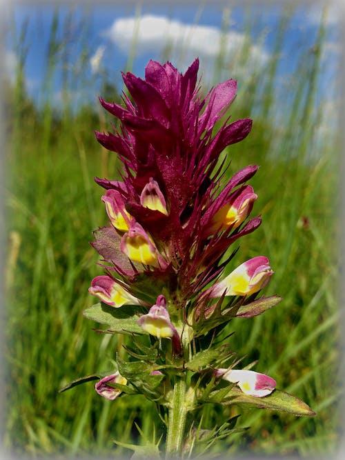 คลังภาพถ่ายฟรี ของ ดอกไม้สีม่วง