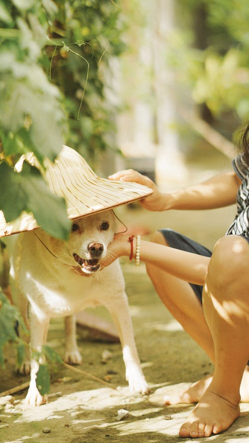 Dog Wearing Sun Hat