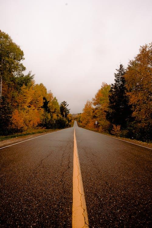 가벼운, 가을, 경치, 경치가 좋은의 무료 스톡 사진