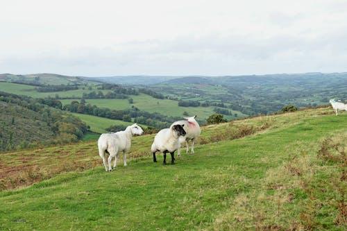 Kostenloses Stock Foto zu bauern felder, berge, graue wolken, grünes gras