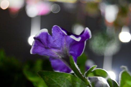 Free stock photo of flower, flowers, purple